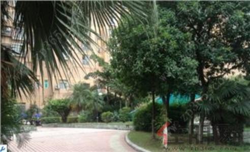城中区-柳州市书香园一房一厅出租