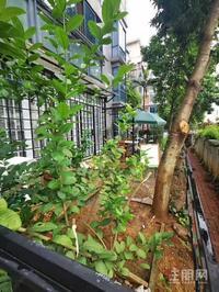 大城小院旁华展华园 一楼带50平米花园 精装修两房
