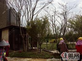 兴宁区凤岭北《大唐印象》带装修,學区房+双公园3房