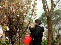 华泰官邸活动图片|植树节2