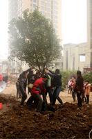 华泰官邸活动图片|植树节4
