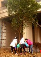 华泰官邸活动图片|植树节5
