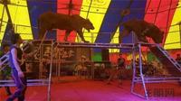 龙光玖珑湖活动图片|马戏团内场气氛热烈