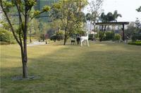 柳州荣和千千树实景图|园林