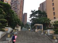 香樟林实景图 项目实景图