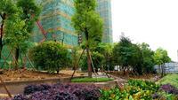 银丰中央首府实景图 二期园林景观绿轴实景图