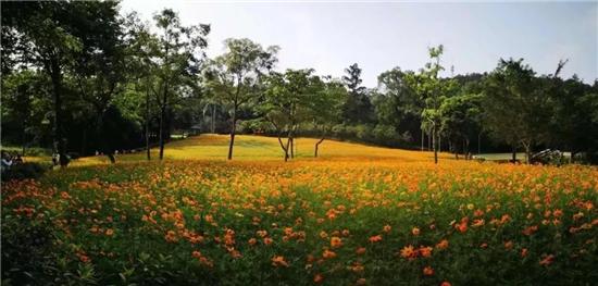 良凤江森林公园.webp.jpg