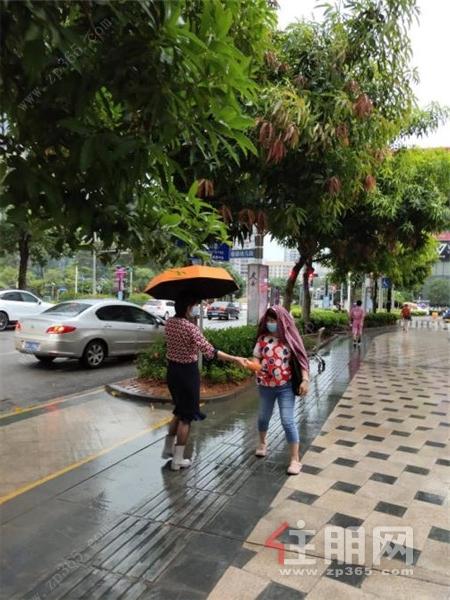 龙胤花园工作人员派发雨伞2.jpg