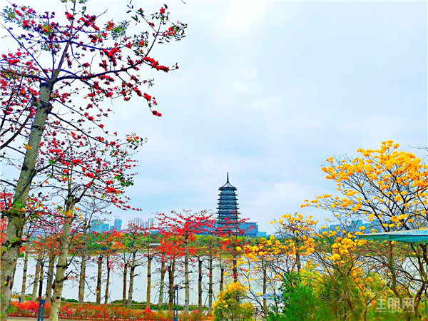 五象湖公園實景圖