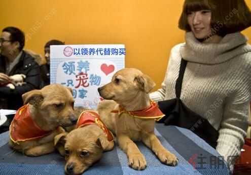 """发起""""关爱,以领养代替购买""""的宠物公益领养活动,为这群可爱的小动物"""