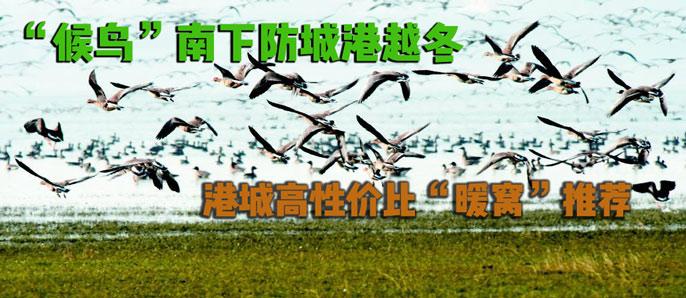 """""""候鸟""""南下越冬 """"港城""""高性价比""""鸟巢"""""""